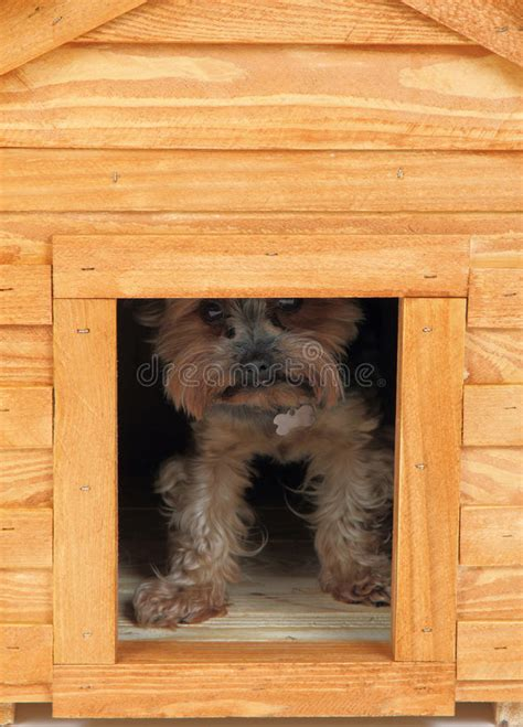 smalldog with wooden dog s house stock image image 30902231 dog at small wooden house stock image image of nice