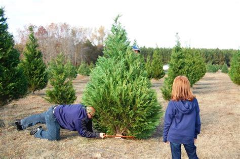 myrtle beach christmas tree farm booth s tree farm