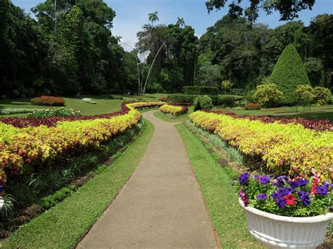 Royal Botanical Gardens Peradeniya Royal Botanical Gardens Peradeniya Photograph By Panoramic Images