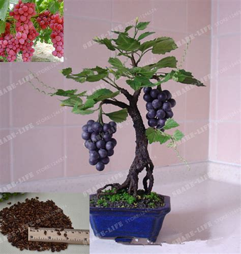 miniature indoor plants online buy wholesale miniature indoor plants from china