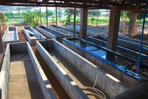 home aquaculture backyard fish farming aquaponic fish farming aqua farming environment