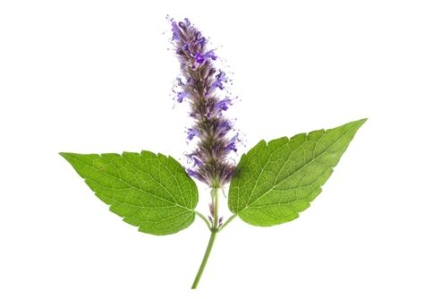 patchouli and the sacredness of everything soulful