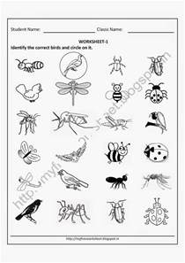 free printable worksheets nursery kindergarten senior kg junior kg insects identify