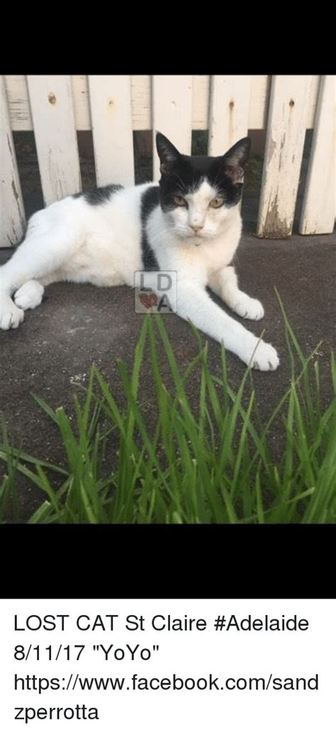 Lost Cat Meme - lost cat st claire adelaide 81117 yoyo