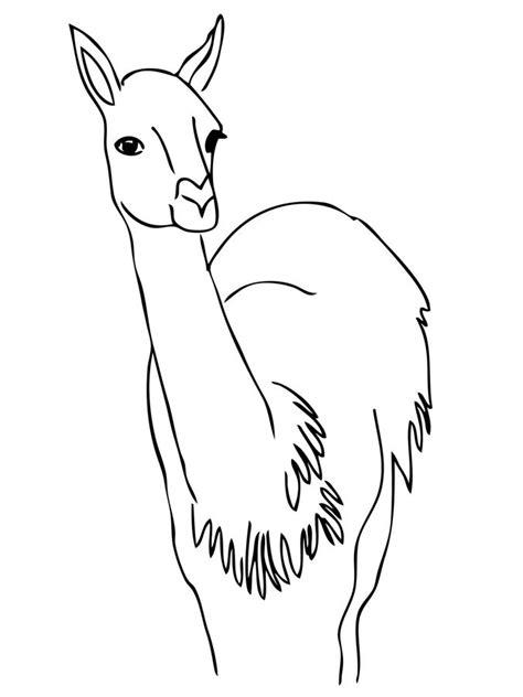 Dibujos para colorear: Guanaco imprimible, gratis, para
