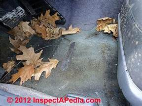 Car Covers Cause Mold Car Mold Jungle Identification Of Molds In A Moldy