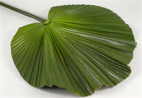 Artificial Palm Leaf 32in