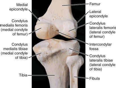 condylus lateralis femoris