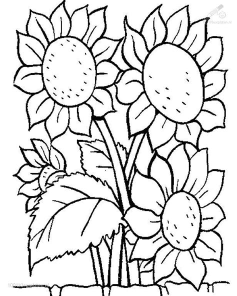 coloring pages of flowers and plants flower coloring pages 1001 coloringpages plants