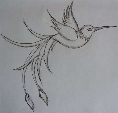 Hummingbird Outline Picture by Related Keywords Suggestions For Hummingbird Outline Designs