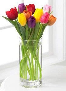 tulips net kate 1000 images about tulips pansies dds on pinterest tulip
