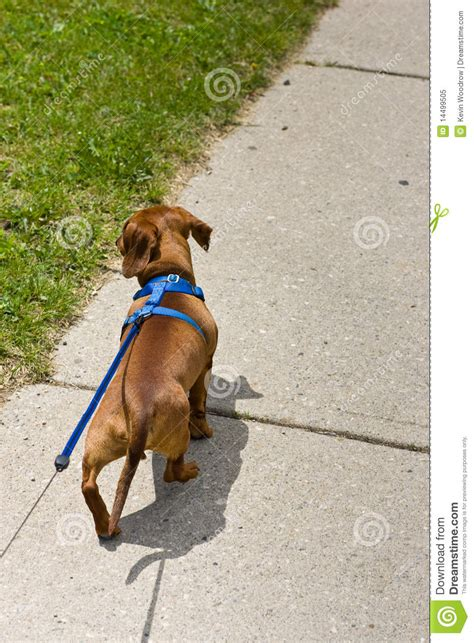 how to to walk on leash properly walking on leash wallpaper