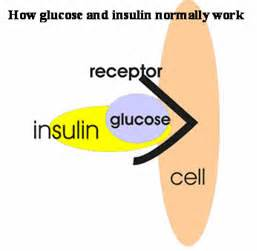 insulin and glucose diagram will you burn more if you exercise on an empty stomach