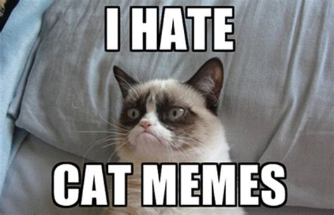 Fuck You Cat Meme - grumpy cat has made its owner 163 64million daily mail online