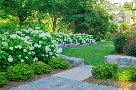 north arlington residence traditional landscape dc metro  katia goffin gardens