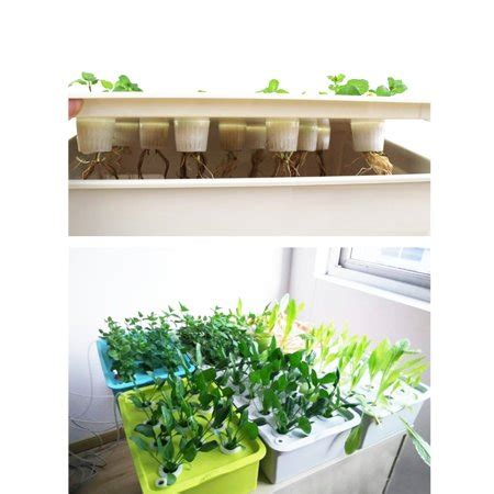 plant sites spots hydroponic system growing kit indoor