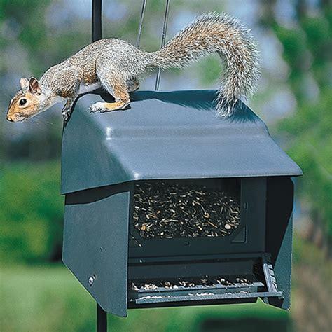 duncraft com super stop a squirrel feeder