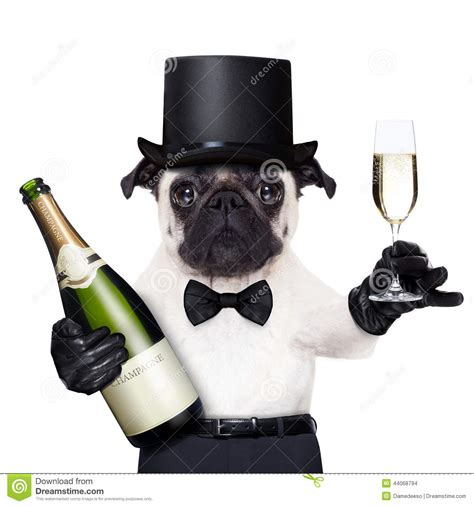 peace puppies cool peace stock photo image of luxury animal glasses 44068794