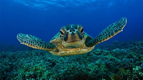 best relax sea turtles coral reef fish 3 hours best relax
