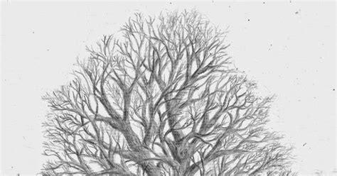 teknik menggambar pohon tak berdaun teknik menggambar