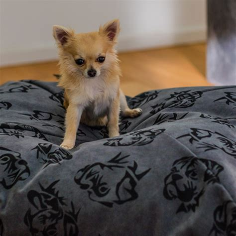 cuscini x cani cuscini per cani box