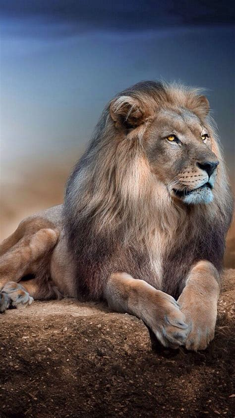 lion wallpaper pinterest lion iphone wallpaper background iphone wallpaper
