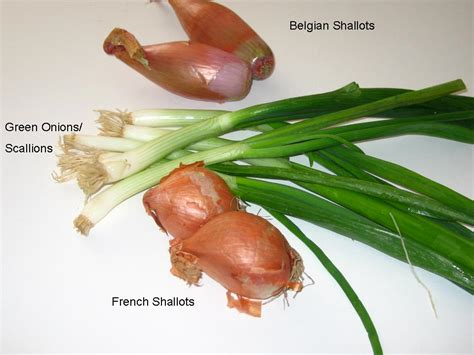 askruth what s a shallot what s a scallion