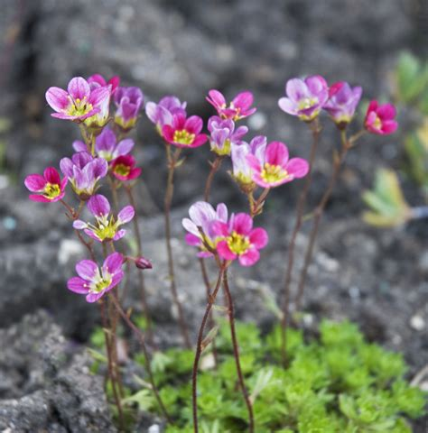 small flower plants image gallery small flowers