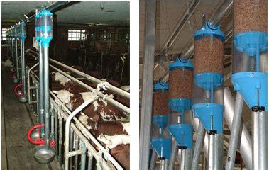 alimentazione bovini da latte falcon srl alimentazione vacche da latte