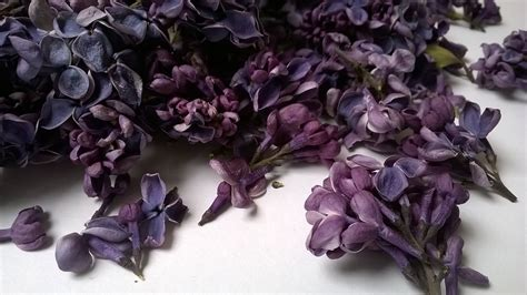 Bloom Box Blue Preserved Flower Uk 10 X10 Cm freeze dried lilac petals dried flowers daisyshop