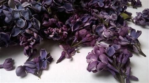 freeze dried lilac petals dried flowers daisyshop