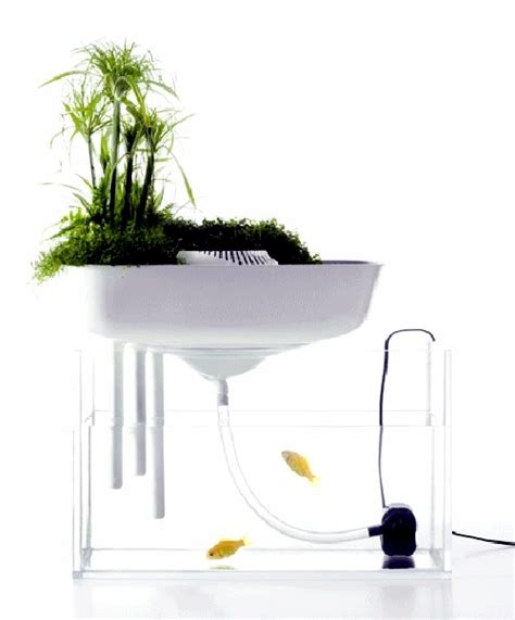 aquarium biofilter design floating mini garden serves as a natural filter for the
