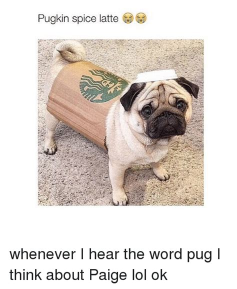pug spice latte pugs memes of 2016 on sizzle cars
