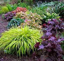 colorful shade plants shade garden plants blue moon farm perennials