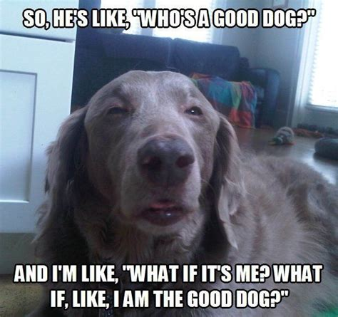 Silly Dog Meme - 67 best dog memes images on pinterest