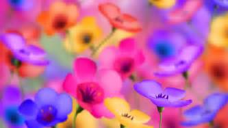 bright colored flowers bright colored flowers wallpaper 27742 1920x1080 px