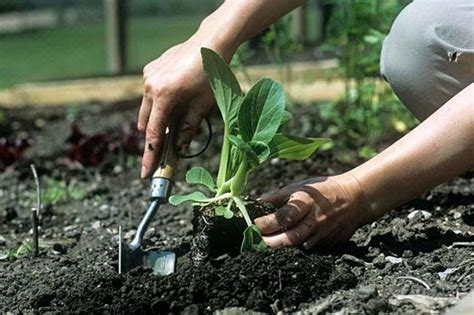 gardening when to plant vegetables getting started with vegetables help and advice on growing veg rhs gardening