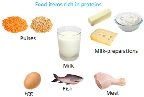 carbohydrates are found in foods that contain proteins to grow building nutrients food