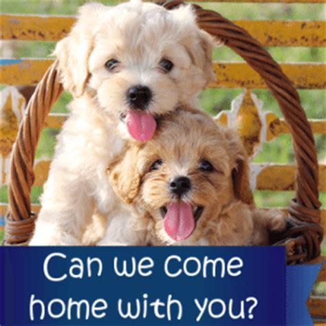 best city dogs best city suburban breeds kid friendly puppies
