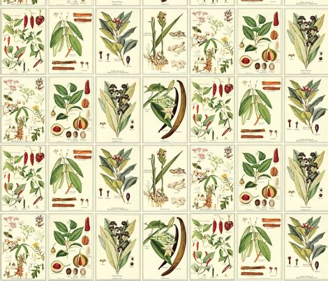 botanical print wallpaper botanical spices fabric studiofibonacci spoonflower