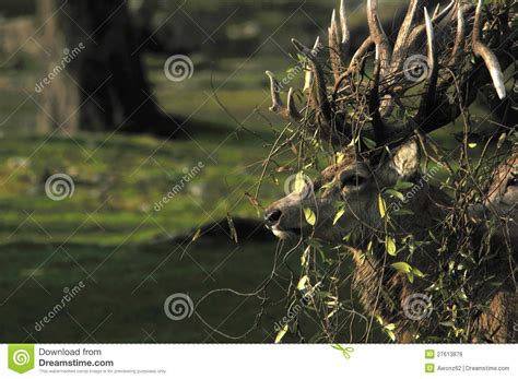 Matted Up by Tangled Up Royalty Free Stock Image Image 27613876