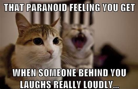 Laughing Cat Meme - sylestia forums
