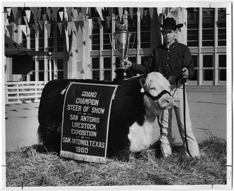 grand champion steer  show san antonio texas