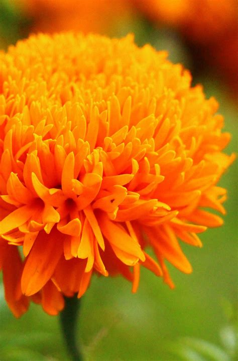 beautiful orange the 35 best flower photos mostbeautifulthings
