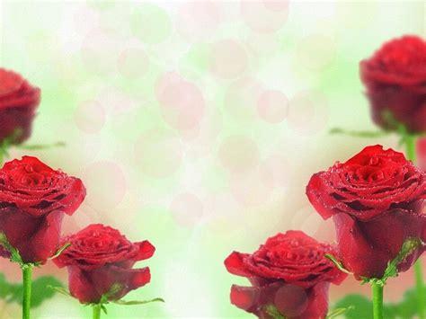 imagenes rosas rojas gratis rosas rojas fondos de pantalla gratis