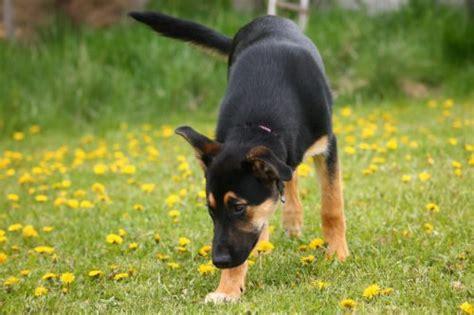 can dogs take claritin can dogs take claritin canna pet 174