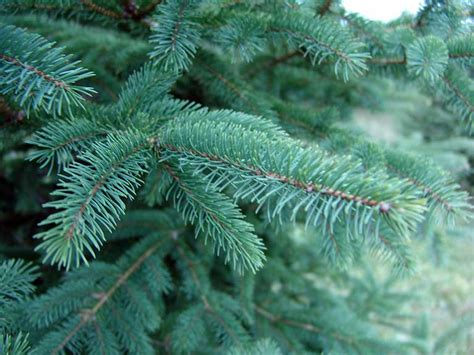 why you should hug your christmas tree woodnote