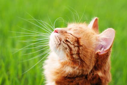 alimentazione gatto anziano gatto randagio anziano molto magro consigli sull