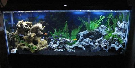 aquarium design with black sand awkatik s freshwater tanks photo id 16235 full version