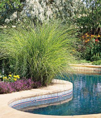 living stingy swimming pool on a budget garden yard pinterest swimming pools budgeting pool landscaping ideas on a budget house decor ideas